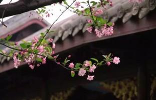 庭院中一些耐寒植物的养护措施