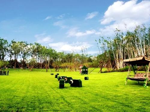冬日的草坪维护小技巧